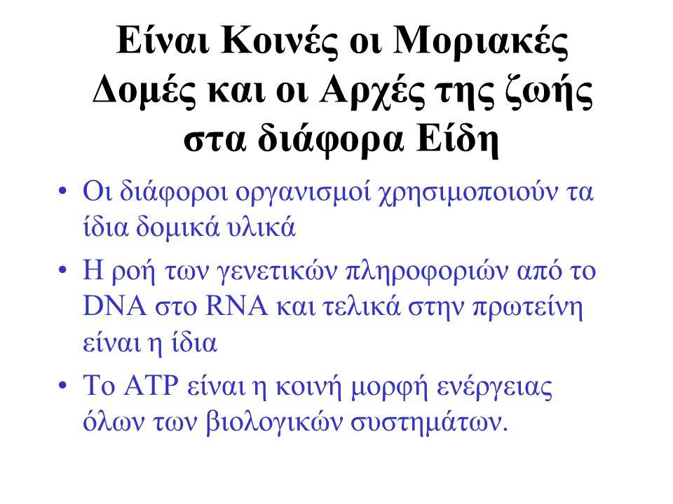Είναι Κοινές οι Μοριακές Δομές και οι Αρχές της ζωής στα διάφορα Είδη Οι διάφοροι οργανισμοί χρησιμοποιούν τα ίδια δομικά υλικά Η ροή των γενετικών πληροφοριών από το DNA στο RΝΑ και τελικά στην πρωτείνη είναι η ίδια Το ΑΤΡ είναι η κοινή μορφή ενέργειας όλων των βιολογικών συστημάτων.