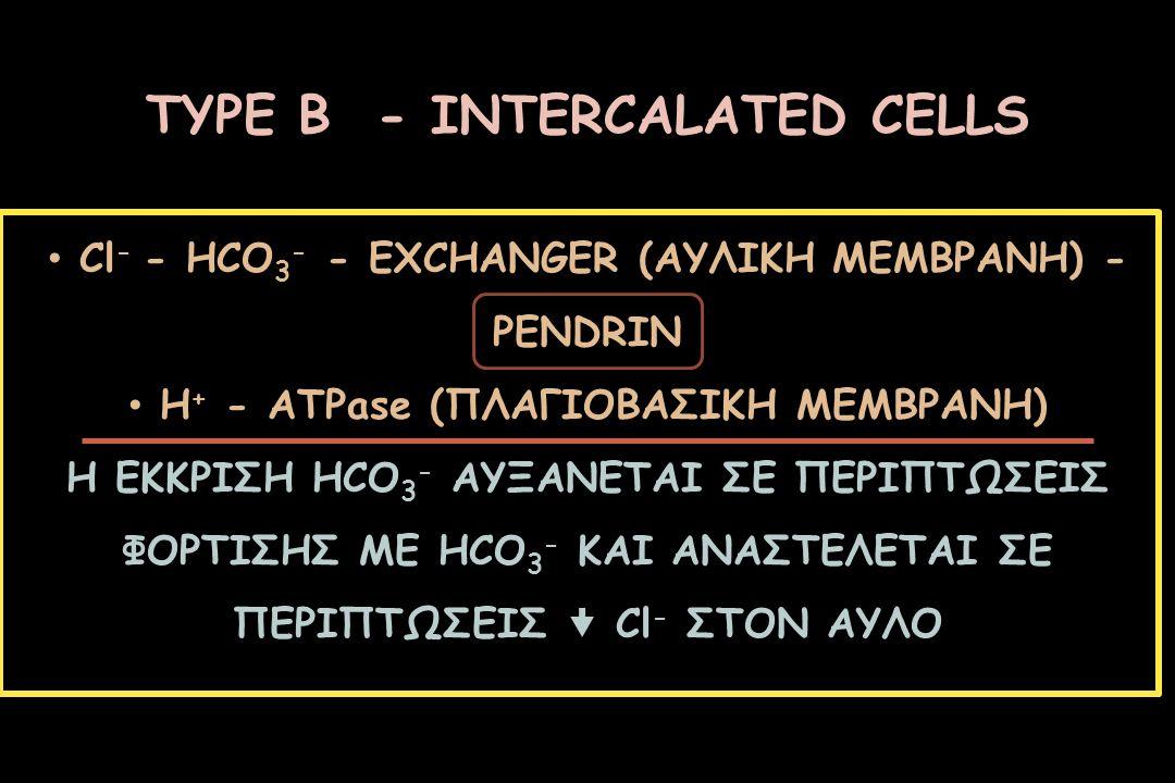 ΤΥPE Β - INTERCALATED CELLS Cl - - HCO 3 - - EXCHANGER (ΑΥΛΙΚΗ ΜΕΜΒΡΑΝΗ) - PENDRIN H + - ATPase (ΠΛΑΓΙΟΒΑΣΙΚΗ ΜΕΜΒΡΑΝΗ) Η ΕΚΚΡΙΣΗ HCO 3 - ΑΥΞΑΝΕΤΑΙ ΣΕ