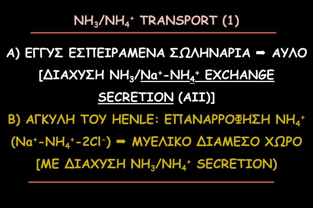 ΝΗ 3 /ΝΗ 4 + TRANSPORT (1) A) ΕΓΓΥΣ ΕΣΠΕΙΡΑΜΕΝΑ ΣΩΛΗΝΑΡΙΑ  ΑΥΛΟ [ΔΙΑΧΥΣΗ NH 3 /Na + -NH 4 + EXCHANGE SECRETION (AII)] B) ΑΓΚΥΛΗ ΤΟΥ HENLE: ΕΠΑΝΑΡΡΟΦΗ