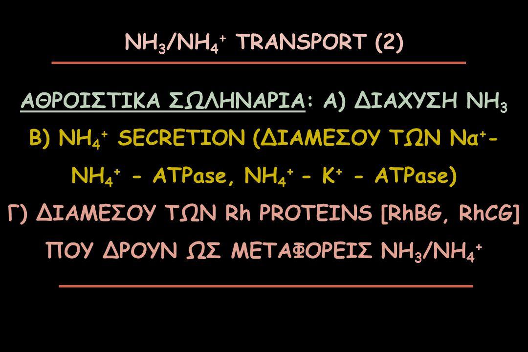 ΝΗ 3 /ΝΗ 4 + TRANSPORT (2) ΑΘΡΟΙΣΤΙΚΑ ΣΩΛΗΝΑΡΙΑ: Α) ΔΙΑΧΥΣΗ NH 3 Β) NH 4 + SECRETION (ΔΙΑΜΕΣΟΥ ΤΩΝ Να + - ΝΗ 4 + - ΑΤPase, ΝΗ 4 + - K + - ΑΤPase) Γ) Δ