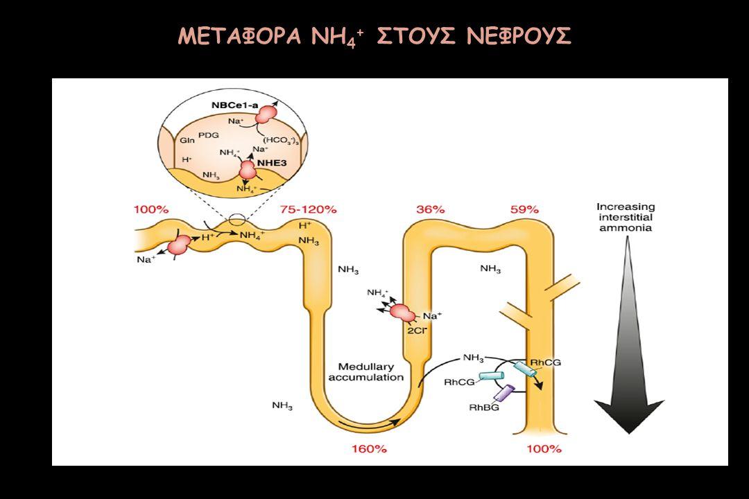 ΜΕΤΑΦΟΡΑ NH 4 + ΣΤΟΥΣ ΝΕΦΡΟΥΣ