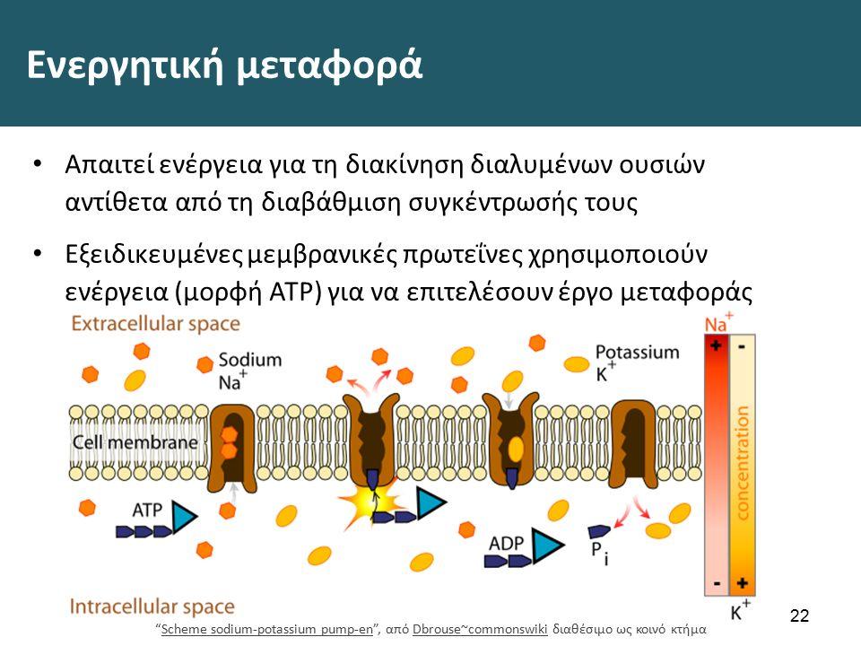 Ενεργητική μεταφορά Απαιτεί ενέργεια για τη διακίνηση διαλυμένων ουσιών αντίθετα από τη διαβάθμιση συγκέντρωσής τους Εξειδικευμένες μεμβρανικές πρωτεΐνες χρησιμοποιούν ενέργεια (μορφή ATP) για να επιτελέσουν έργο μεταφοράς 22 Scheme sodium-potassium pump-en , από Dbrouse~commonswiki διαθέσιμο ως κοινό κτήμαScheme sodium-potassium pump-enDbrouse~commonswiki