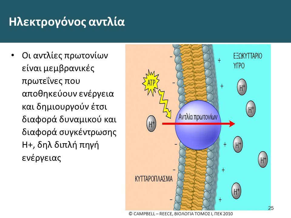 Ηλεκτρογόνος αντλία Οι αντλίες πρωτονίων είναι μεμβρανικές πρωτεΐνες που αποθηκεύουν ενέργεια και δημιουργούν έτσι διαφορά δυναμικού και διαφορά συγκέντρωσης H+, δηλ διπλή πηγή ενέργειας 25 © CAMPBELL – REECE, ΒΙΟΛΟΓΙΑ ΤΟΜΟΣ Ι, ΠΕΚ 2010