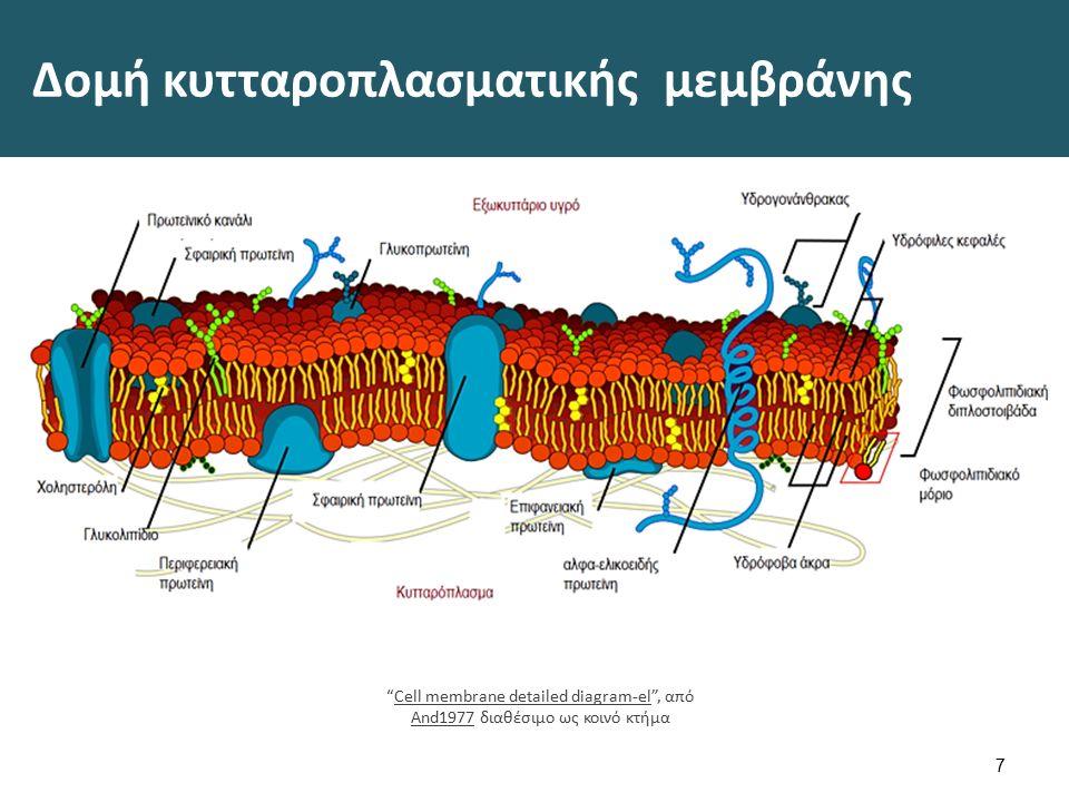 """Δομή κυτταροπλασματικής μεμβράνης 7 """"Cell membrane detailed diagram-el"""", από And1977 διαθέσιμο ως κοινό κτήμαCell membrane detailed diagram-el And1977"""