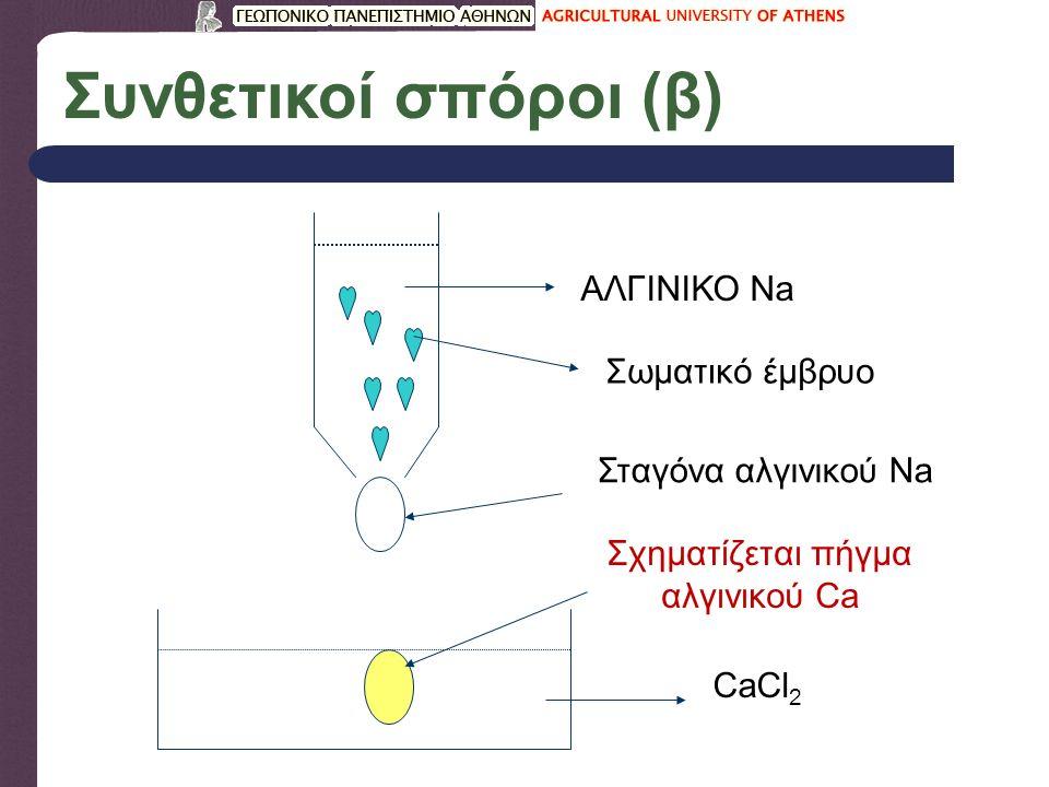 Συνθετικοί σπόροι (β) ΑΛΓΙΝΙΚΟ Νa Σωματικό έμβρυο Σταγόνα αλγινικού Na CaCl 2 Σχηματίζεται πήγμα αλγινικού Ca