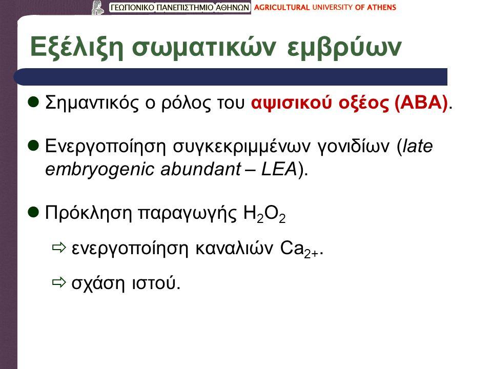 Ωρίμανση εμβρύων (α) Ωρίμανση εμβρύων: με ποιους τρόπους επιτυγχάνεται; Αφυδάτωση με ρεύμα αέρα (40  C).