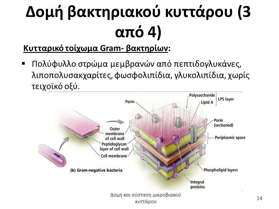 Δομή βακτηριακού κυττάρου (3 από 4) Κυτταρικό τοίχωμα Gram- βακτηρίων:  Πολύφυλλο στρώμα μεμβρανών από πεπτιδογλυκάνες, λιποπολυσακχαρίτες, φωσφολιπί