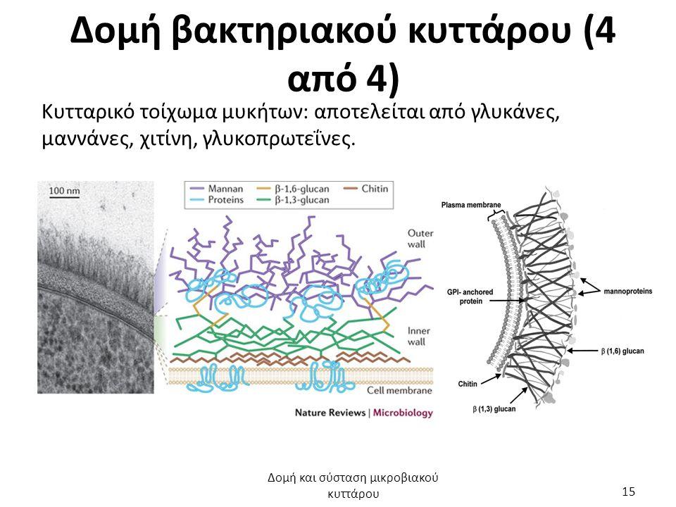 Δομή βακτηριακού κυττάρου (4 από 4) Κυτταρικό τοίχωμα μυκήτων: αποτελείται από γλυκάνες, μαννάνες, χιτίνη, γλυκοπρωτεΐνες. Δομή και σύσταση μικροβιακο