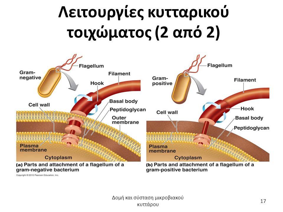 Λειτουργίες κυτταρικού τοιχώματος (2 από 2) Δομή και σύσταση μικροβιακού κυττάρου 17