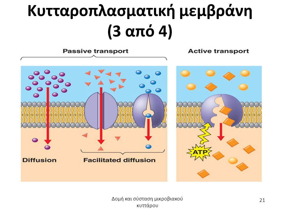 Κυτταροπλασματική μεμβράνη (3 από 4) Δομή και σύσταση μικροβιακού κυττάρου 21