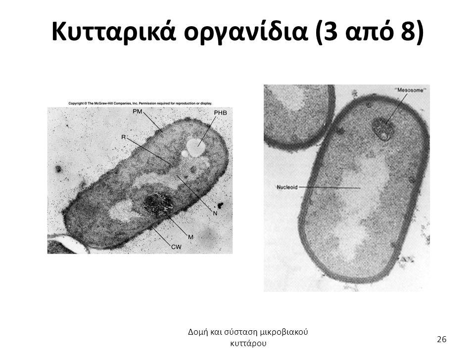 Κυτταρικά οργανίδια (3 από 8) Δομή και σύσταση μικροβιακού κυττάρου 26