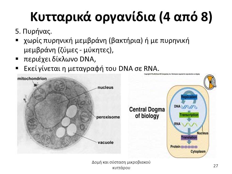 Κυτταρικά οργανίδια (4 από 8) 5. Πυρήνας.  χωρίς πυρηνική μεμβράνη (βακτήρια) ή με πυρηνική μεμβράνη (ζύμες - μύκητες),  περιέχει δίκλωνο DNA,  Εκε