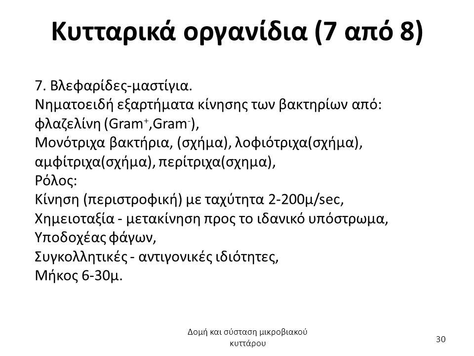 Κυτταρικά οργανίδια (7 από 8) 7. Βλεφαρίδες-μαστίγια. Νηματοειδή εξαρτήματα κίνησης των βακτηρίων από: φλαζελίνη (Gram +,Gram - ), Μονότριχα βακτήρια,