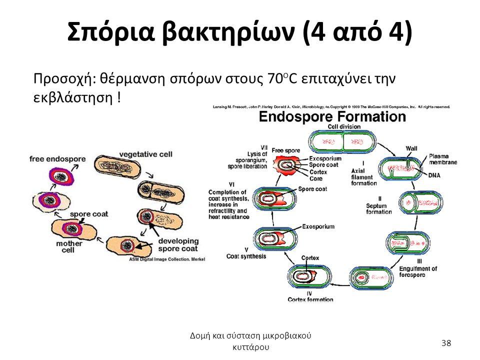Σπόρια βακτηρίων (4 από 4) Προσοχή: θέρμανση σπόρων στους 70 ο C επιταχύνει την εκβλάστηση ! Δομή και σύσταση μικροβιακού κυττάρου 38