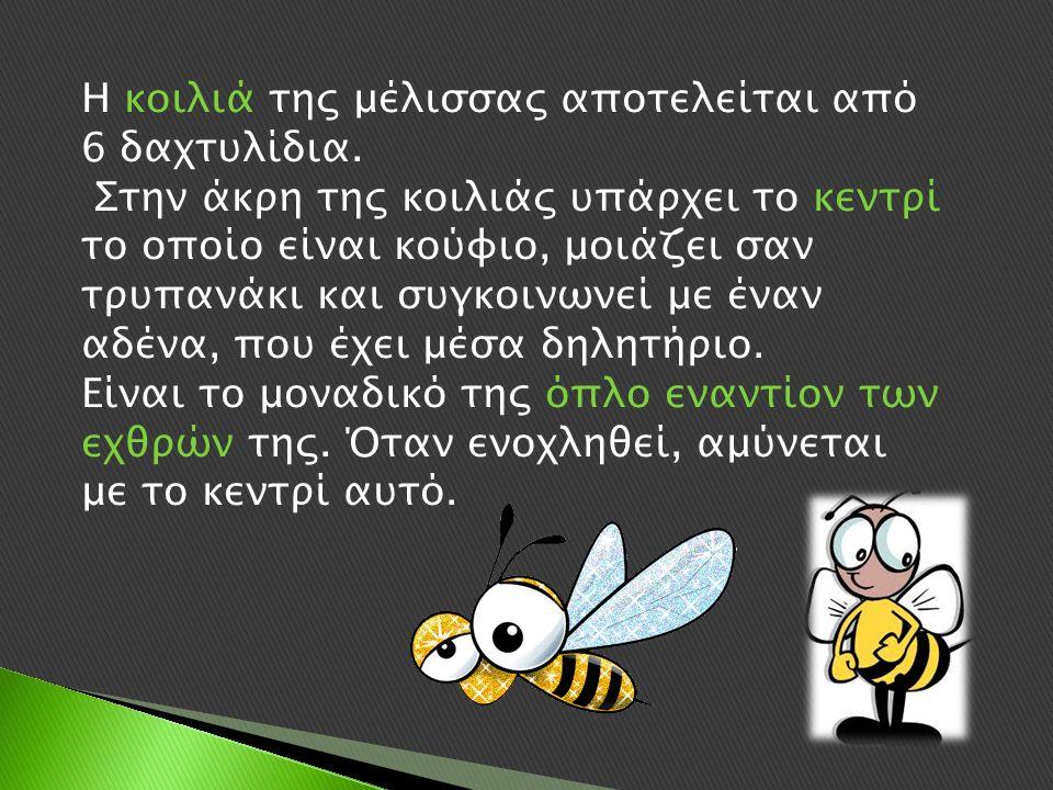 Η κοιλιά της μέλισσας αποτελείται από 6 δαχτυλίδια.