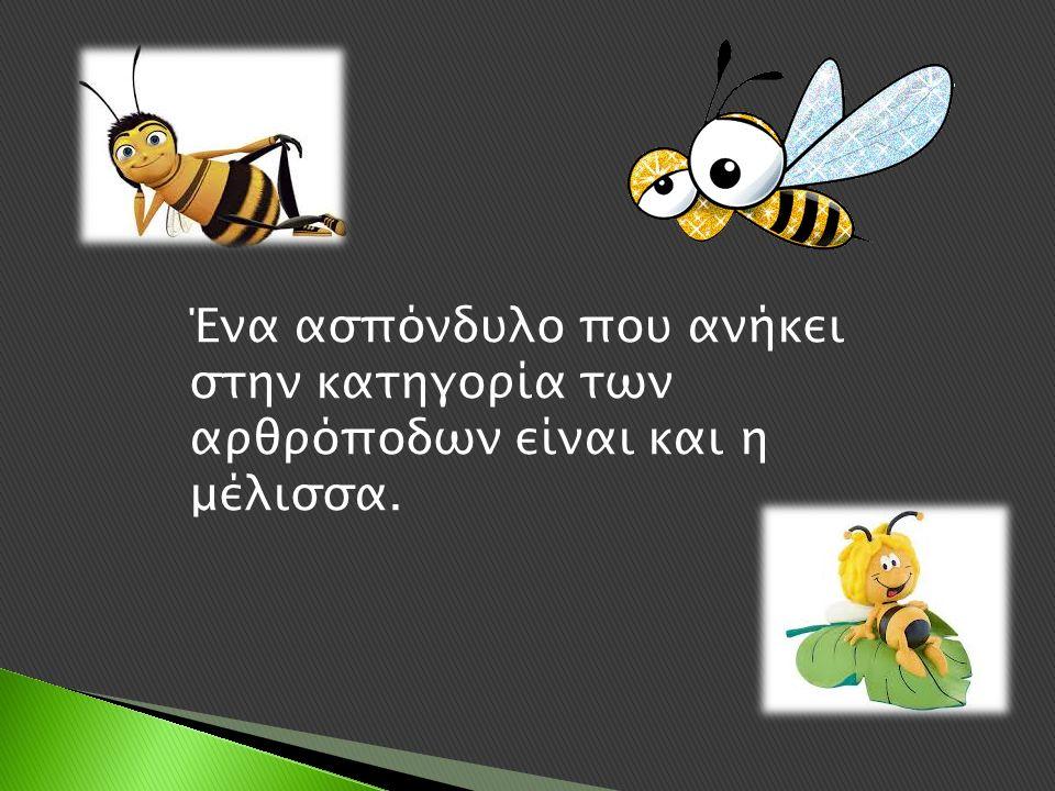 Ένα ασπόνδυλο που ανήκει στην κατηγορία των αρθρόποδων είναι και η μέλισσα.