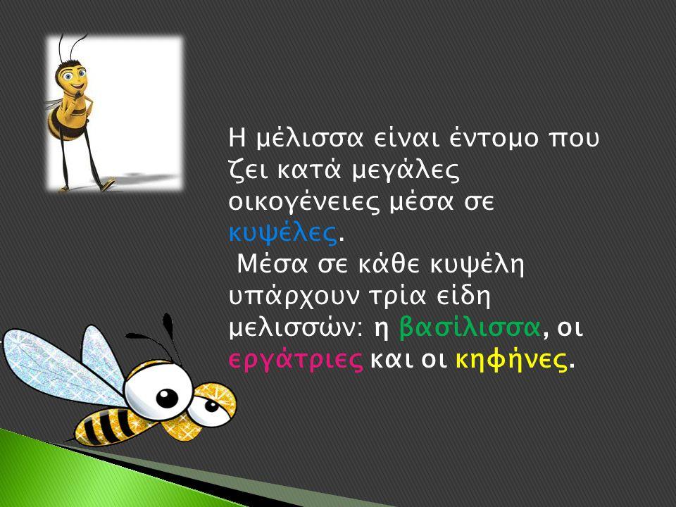 Η μέλισσα είναι έντομο που ζει κατά μεγάλες οικογένειες μέσα σε κυψέλες.