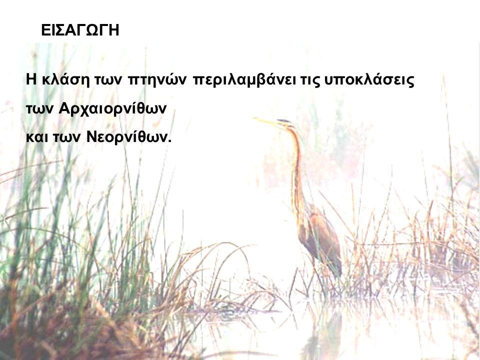 ΕΙΣΑΓΩΓΗ Η κλάση των πτηνών περιλαμβάνει τις υποκλάσεις των Αρχαιορνίθων και των Νεορνίθων.