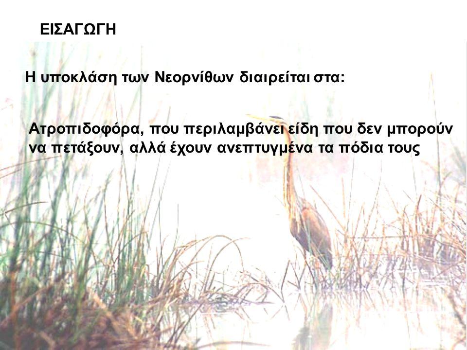 ΕΙΣΑΓΩΓΗ Η υποκλάση των Νεορνίθων διαιρείται στα: Ατροπιδοφόρα, που περιλαμβάνει είδη που δεν μπορούν να πετάξουν, αλλά έχουν ανεπτυγμένα τα πόδια τους
