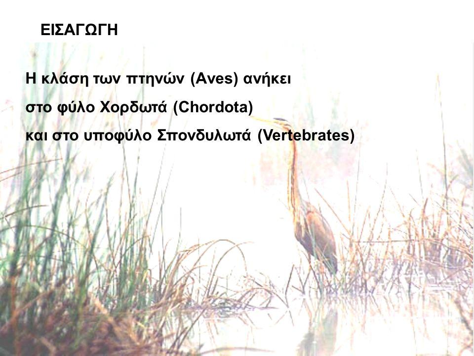 Η κλάση των πτηνών (Αves) ανήκει στο φύλο Χορδωτά (Chordota) και στο υποφύλο Σπονδυλωτά (Vertebrates)
