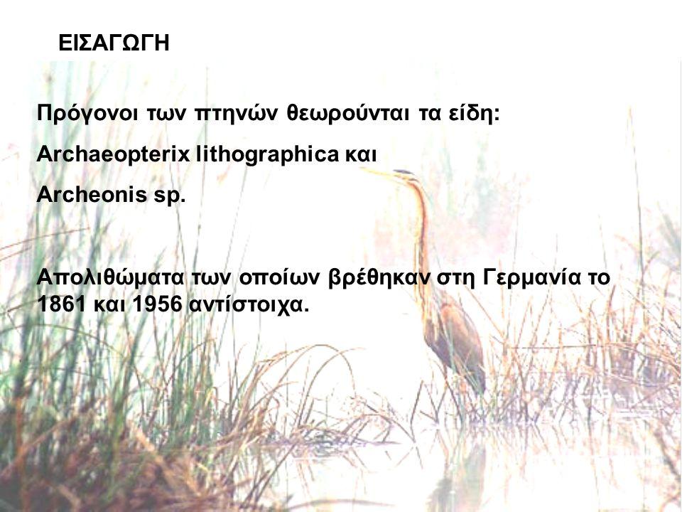 ΕΙΣΑΓΩΓΗ Πρόγονοι των πτηνών θεωρούνται τα είδη: Archaeopterix lithographica και Archeonis sp.
