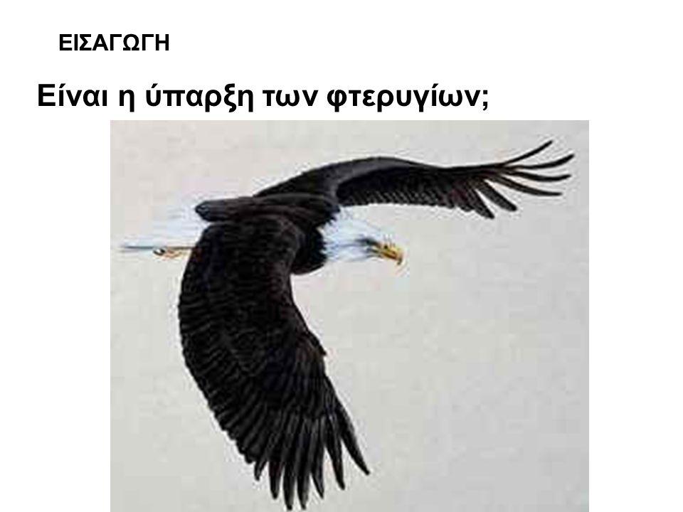 ΕΙΣΑΓΩΓΗ Είναι η ύπαρξη των φτερυγίων;