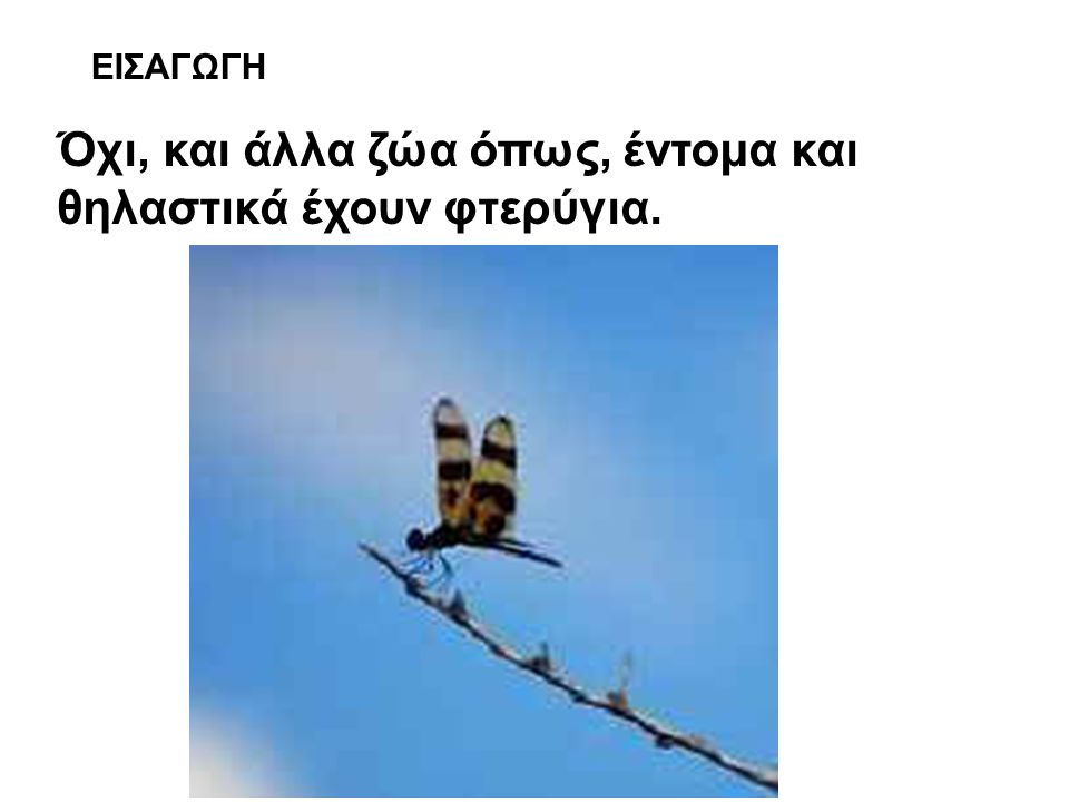 ΕΙΣΑΓΩΓΗ Όχι, και άλλα ζώα όπως, έντομα και θηλαστικά έχουν φτερύγια.