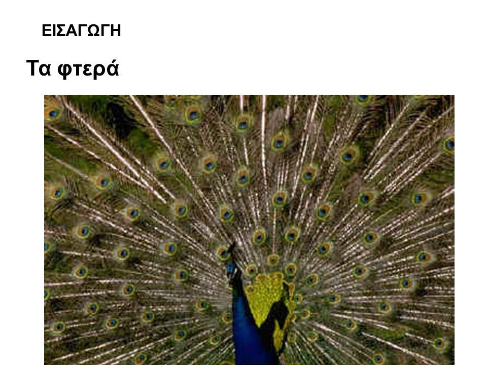 ΕΙΣΑΓΩΓΗ Τα φτερά