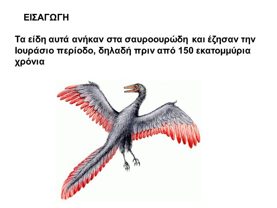 ΕΙΣΑΓΩΓΗ Τα είδη αυτά ανήκαν στα σαυροουρώδη και έζησαν την Ιουράσιο περίοδο, δηλαδή πριν από 150 εκατομμύρια χρόνια