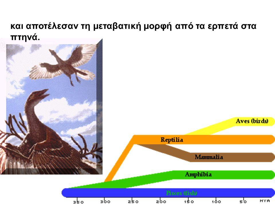 και αποτέλεσαν τη μεταβατική μορφή από τα ερπετά στα πτηνά.