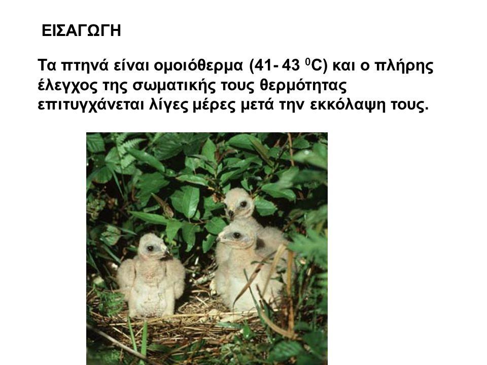 ΕΙΣΑΓΩΓΗ Τα πτηνά είναι ομοιόθερμα (41- 43 0 C) και ο πλήρης έλεγχος της σωματικής τους θερμότητας επιτυγχάνεται λίγες μέρες μετά την εκκόλαψη τους.