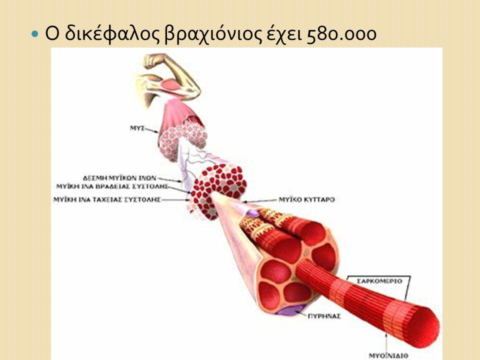 Ο δικέφαλος βραχιόνιος έχει 580.000