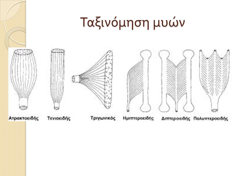 Ταξινόμηση μυών