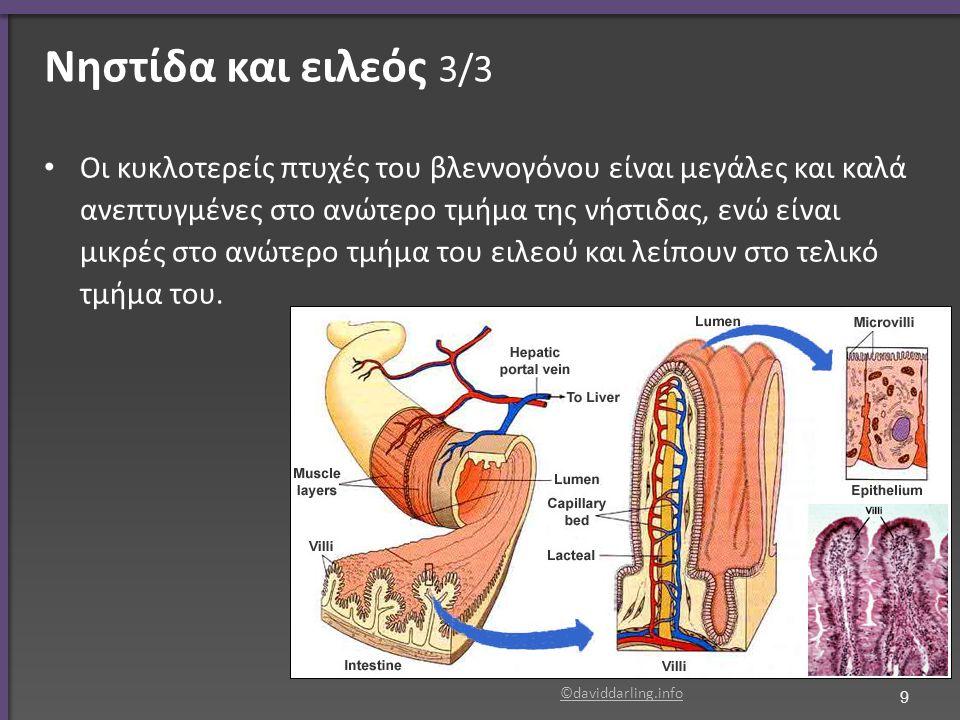 Νηστίδα και ειλεός 3/3 Οι κυκλοτερείς πτυχές του βλεννογόνου είναι μεγάλες και καλά ανεπτυγμένες στο ανώτερο τμήμα της νήστιδας, ενώ είναι μικρές στο
