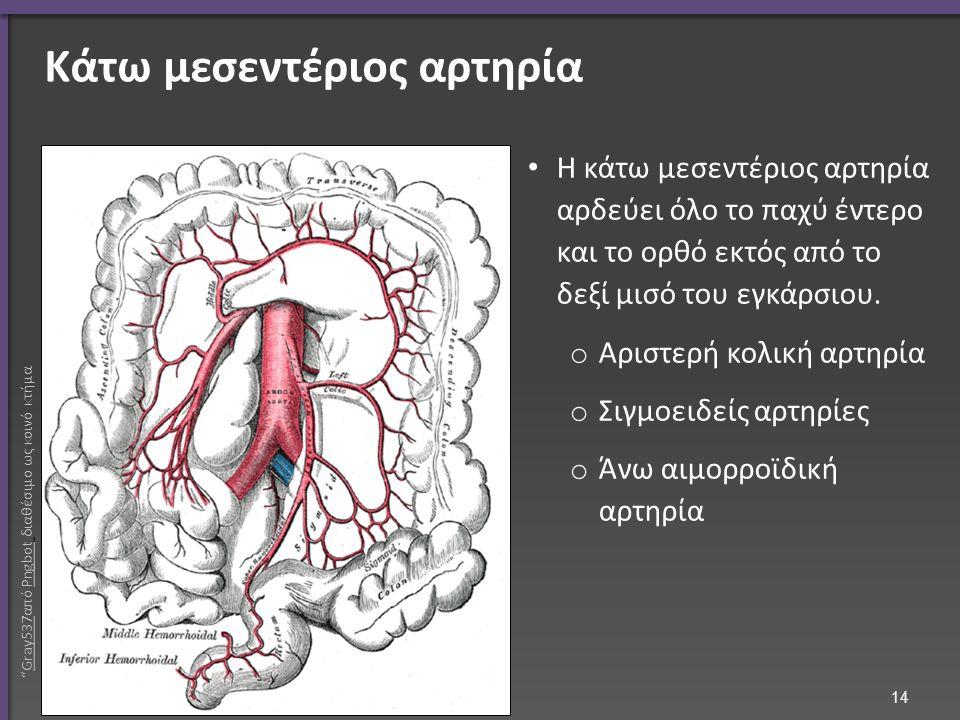 Κάτω μεσεντέριος αρτηρία H κάτω μεσεντέριος αρτηρία αρδεύει όλο το παχύ έντερο και το ορθό εκτός από το δεξί μισό του εγκάρσιου. o Αριστερή κολική αρτ