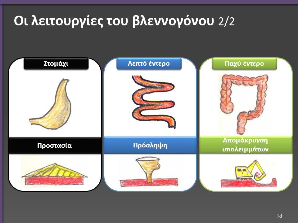 18 Στομάχι Λεπτό έντερο Παχύ έντερο Προστασία Πρόσληψη Απομάκρυνση υπολειμμάτων Οι λειτουργίες του βλεννογόνου 2/2
