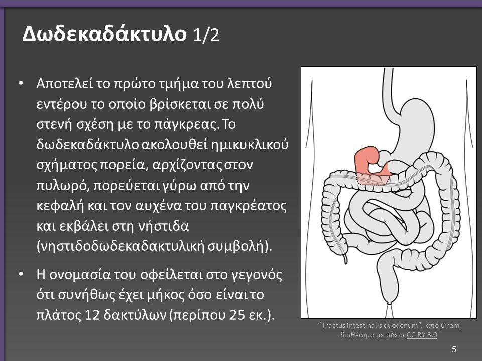 Δωδεκαδάκτυλο 1/2 Αποτελεί το πρώτο τμήμα του λεπτού εντέρου το οποίο βρίσκεται σε πολύ στενή σχέση με το πάγκρεας.