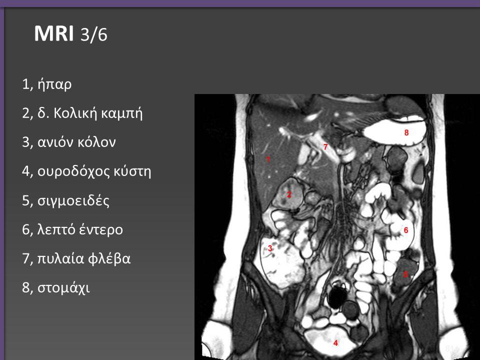 ΜRI 3/6 1, ήπαρ 2, δ. Κολική καμπή 3, ανιόν κόλον 4, ουροδόχος κύστη 5, σιγμοειδές 6, λεπτό έντερο 7, πυλαία φλέβα 8, στομάχι 81