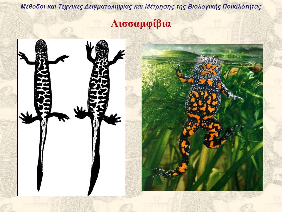 Μέθοδοι και Τεχνικές Δειγματοληψίας και Μέτρησης της Βιολογικής Ποικιλότητας Λισσαμφίβια