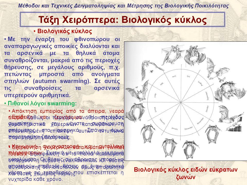 Τάξη Χειρόπτερα: Βιολογικός κύκλος Βιολογικός κύκλος Με την έναρξη του φθινοπώρου οι αναπαραγωγικές αποικίες διαλύονται και τα αρσενικά με τα θηλυκά άτομα συναθροίζονται, μακριά από τις περιοχές θήρευσης, σε μεγάλους αριθμούς, π.χ.