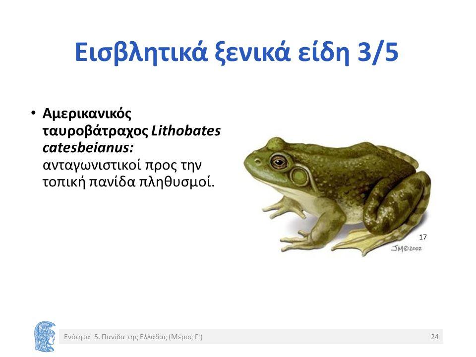Εισβλητικά ξενικά είδη 3/5 Αμερικανικός ταυροβάτραχος Lithobates catesbeianus: ανταγωνιστικοί προς την τοπική πανίδα πληθυσμοί.