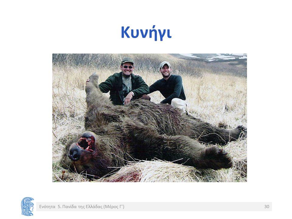 Κυνήγι Ενότητα 5. Πανίδα της Ελλάδας (Μέρος Γ )30 22