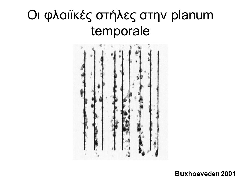 Οι φλοιϊκές στήλες στην planum temporale Buxhoeveden 2001