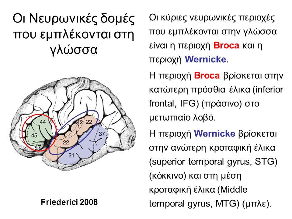Οι Νευρωνικές δομές που εμπλέκονται στη γλώσσα Οι κύριες νευρωνικές περιοχές που εμπλέκονται στην γλώσσα είναι η περιοχή Broca και η περιοχή Wernicke.