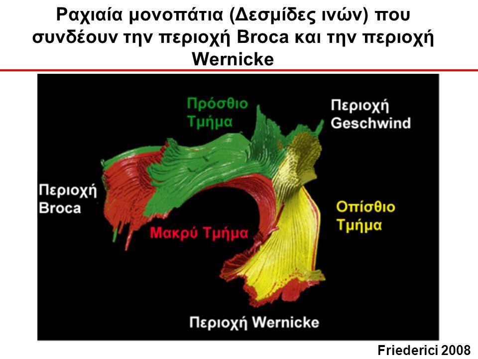 Ραχιαία μονοπάτια (Δεσμίδες ινών) που συνδέουν την περιοχή Broca και την περιοχή Wernicke Friederici 2008