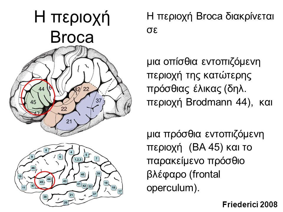 Η περιοχή Wernicke Εντός της άνω κροταφικής έλικας, η περιοχή Wernicke διακρίνεται κυτταροαρχιτεκτονικά στην περιοχή Brodmann 22 και την περιοχή Brodmann 42.