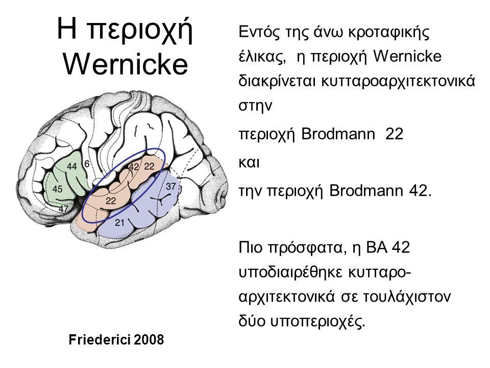 Οι νευροανατομικές δομές που σχετίζονται με την επικοινωνία στους ανθρώπους υπάρχουνκαι στους great apes Αν και είναι πιθανό ότι έχουν εμφανιστεί και έχουν αποκτήσει τις λειτουργίες τους ανεξάρτητα σε κάθε γενεαλογία, η πιο απλή εξήγηση είναι ότι ο κοινός πρόγονος των great apes και των ανθρώπων είχε ασύμμετρα κέντρα που συμμετείχαν στην επικοινωνία, και ότι οι δομές αυτές υποβλήθηκαν σε ανεξάρτητη εξελικτική τροποποίηση σε χιμπατζήδες και ανθρωπίδες (hominins).