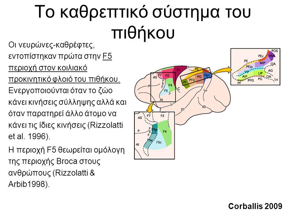 Το καθρεπτικό σύστημα του πιθήκου Οι νευρώνες-καθρέφτες, εντοπίστηκαν πρώτα στην F5 περιοχή στον κοιλιακό προκινητικό φλοιό του πιθήκου.