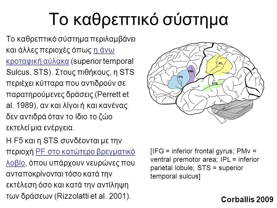 Το καθρεπτικό σύστημα Το καθρεπτικό σύστημα περιλαμβάνει και άλλες περιοχές όπως η άνω κροταφική αύλακα (superior temporal Sulcus, STS).
