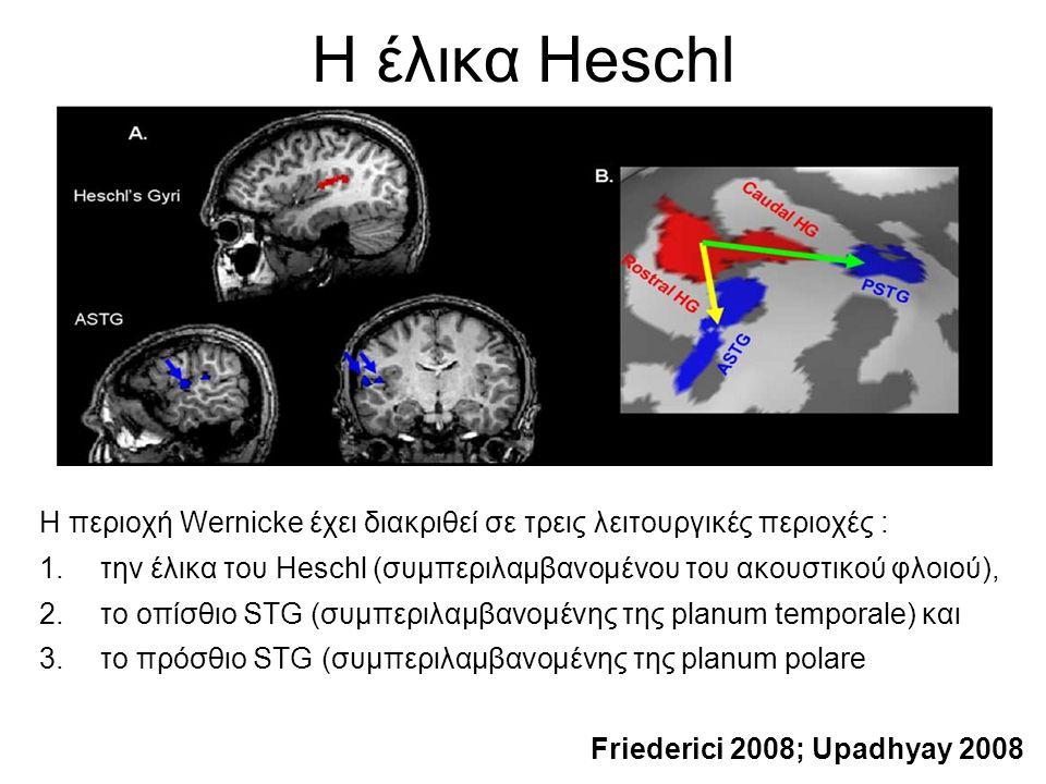 H έλικα Heschl H περιοχή Wernicke έχει διακριθεί σε τρεις λειτουργικές περιοχές : 1.την έλικα του Heschl (συμπεριλαμβανομένου του ακουστικού φλοιού), 2.το οπίσθιο STG (συμπεριλαμβανομένης της planum temporale) και 3.το πρόσθιο STG (συμπεριλαμβανομένης της planum polare Friederici 2008; Upadhyay 2008